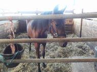 mattland-horses